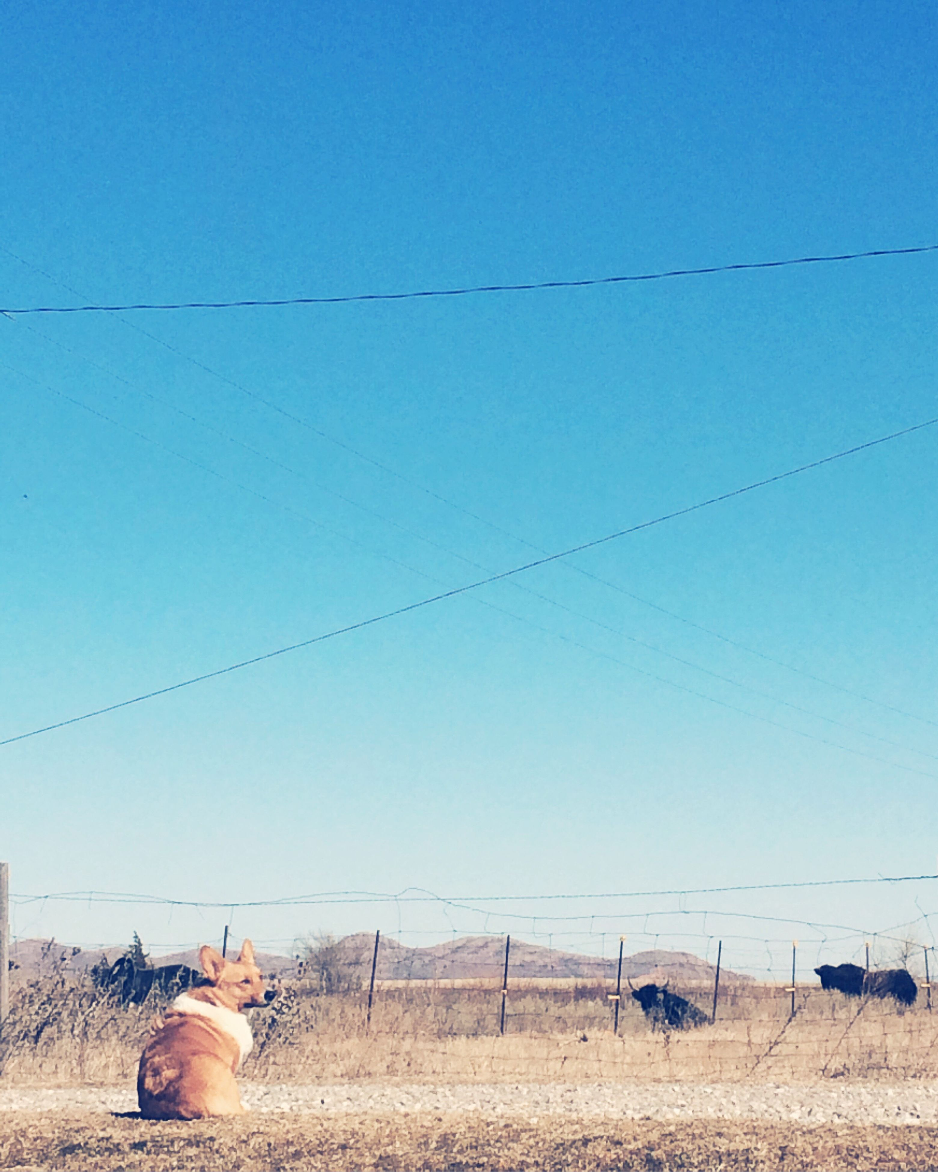 field, clear sky, landscape, blue, rural scene, power line, electricity pylon, agriculture, sky, farm, cable, animal themes, fuel and power generation, electricity, nature, power supply, grass, day, livestock, copy space