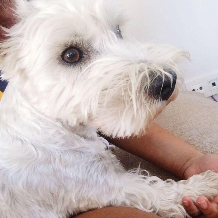 ❤️if my dog is prettier than you Autolike LMAO Nochill