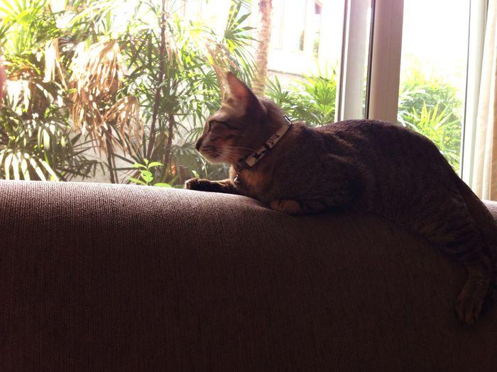 โหมดแมวอืดนั่งฟังนกร้อง