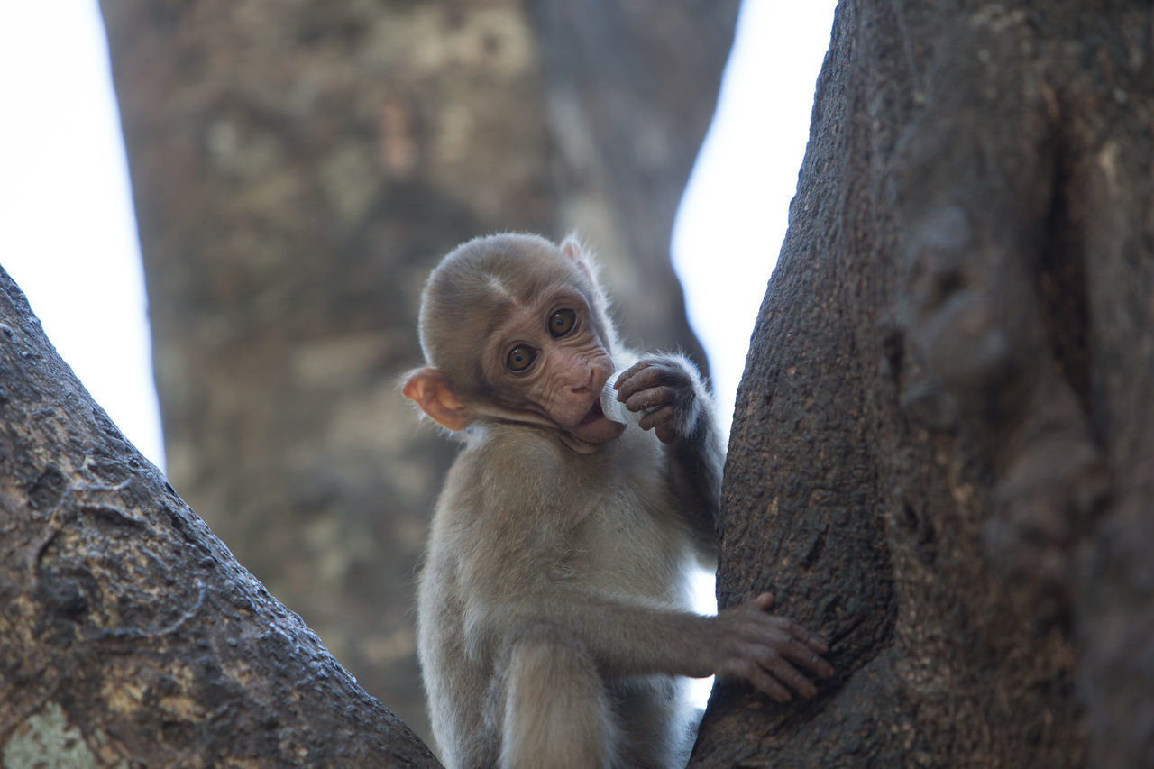 Beautiful stock photos of affe,  Animal Themes,  Animal Wildlife,  Animals In The Wild,  Close-Up