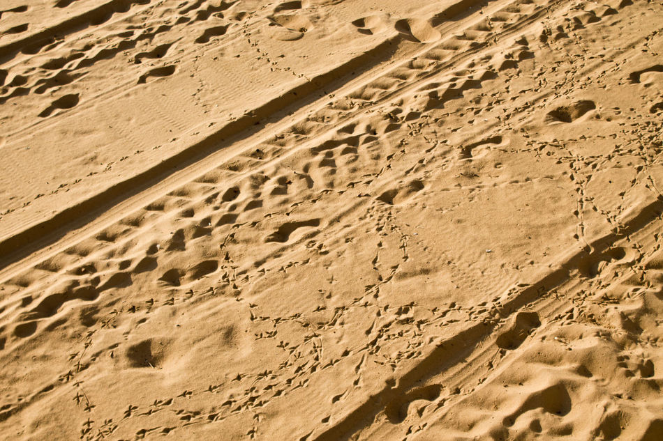 Bird Tracks FootPrint High Angle View No People Pattern Sand Sunlight Textured  Tracks Tracks In The Sand Tracks On The Beach Tranquility The KIOMI Collection
