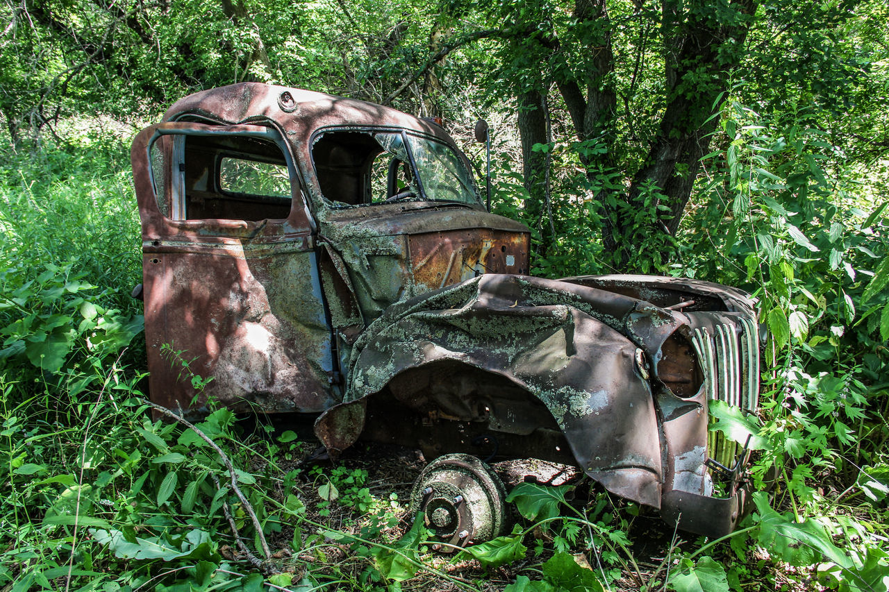 Old wrecked truck in the woods. Abandoned Bad Condition Broken Canon60d Canonphotography Damaged Dented Green Old Plant Rusty Summer Trees Truck Woods Wrecked
