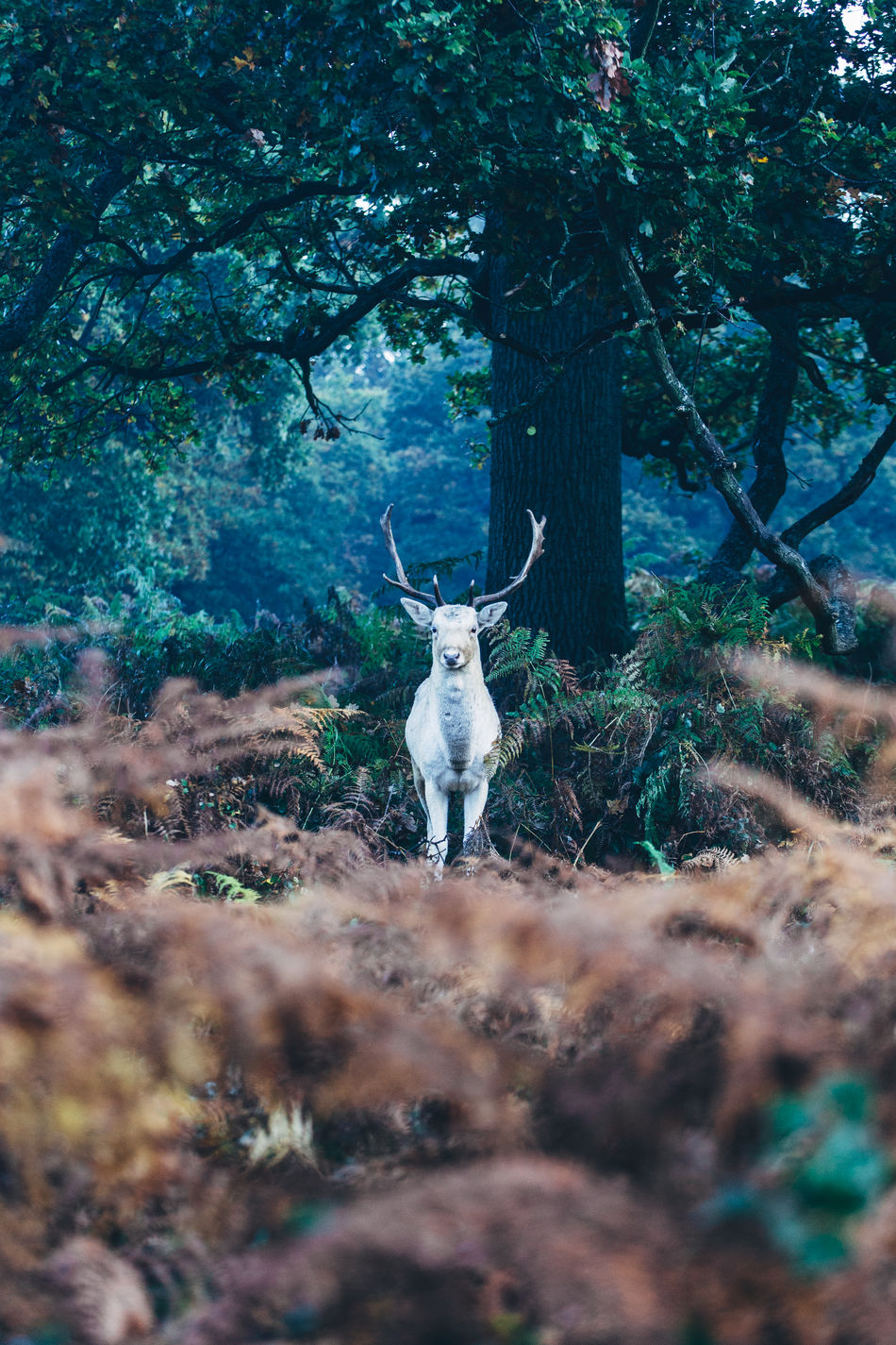 Animal Themes Animals In The Wild Antler Beauty In Nature Day Deer Der Forest Mammal Nature No People One Animal Outdoors Reindeer Sky Stag Tree White Dress