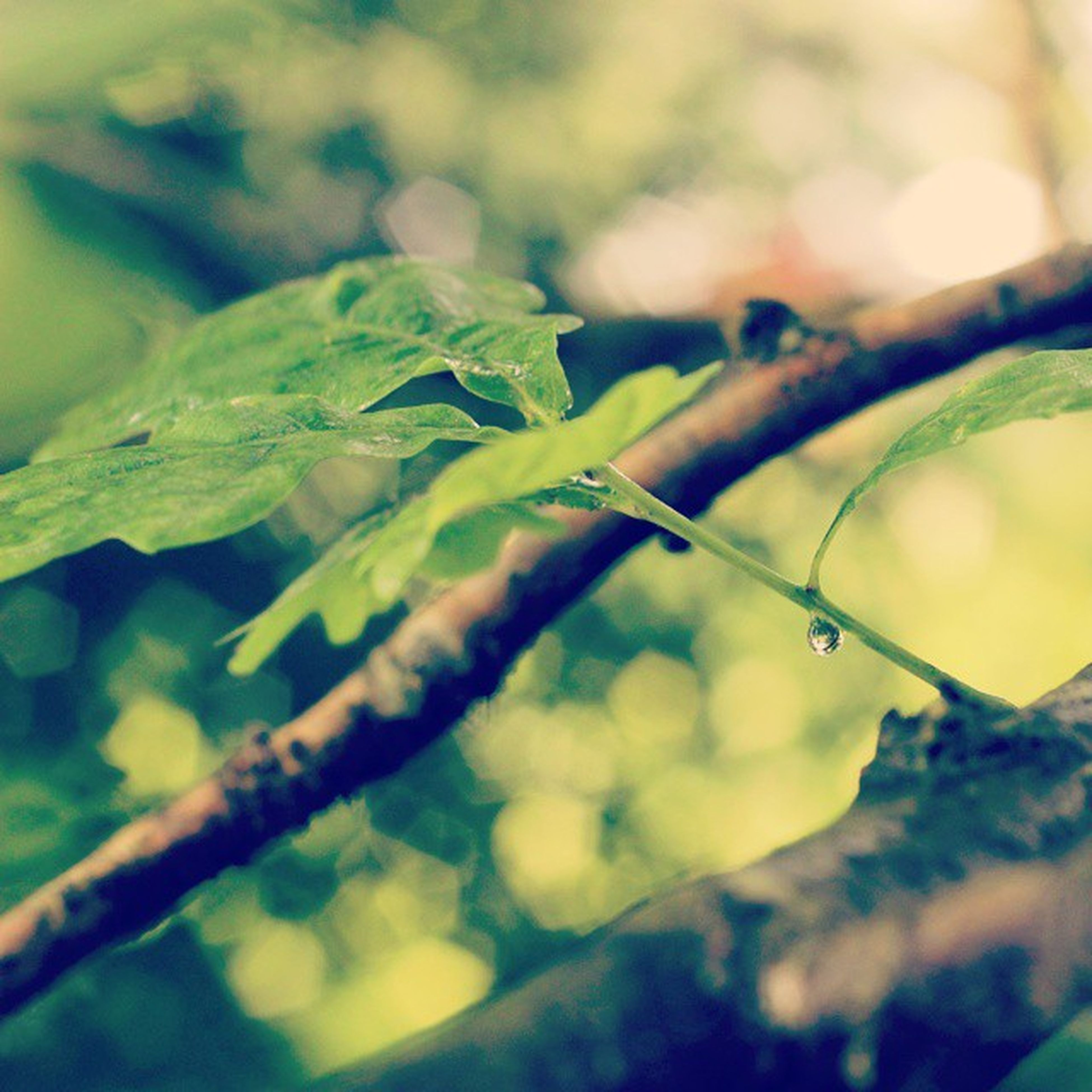 focus on foreground, close-up, leaf, growth, selective focus, green color, branch, nature, twig, plant, water, beauty in nature, tranquility, day, drop, outdoors, wet, no people, stem, tree