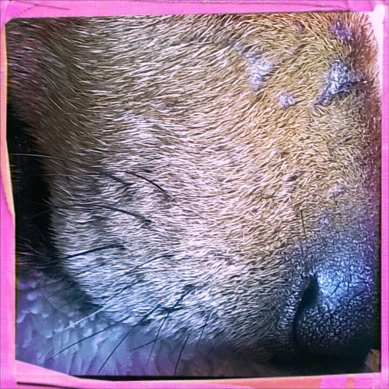 One Animal Dogslife Bertie Dog
