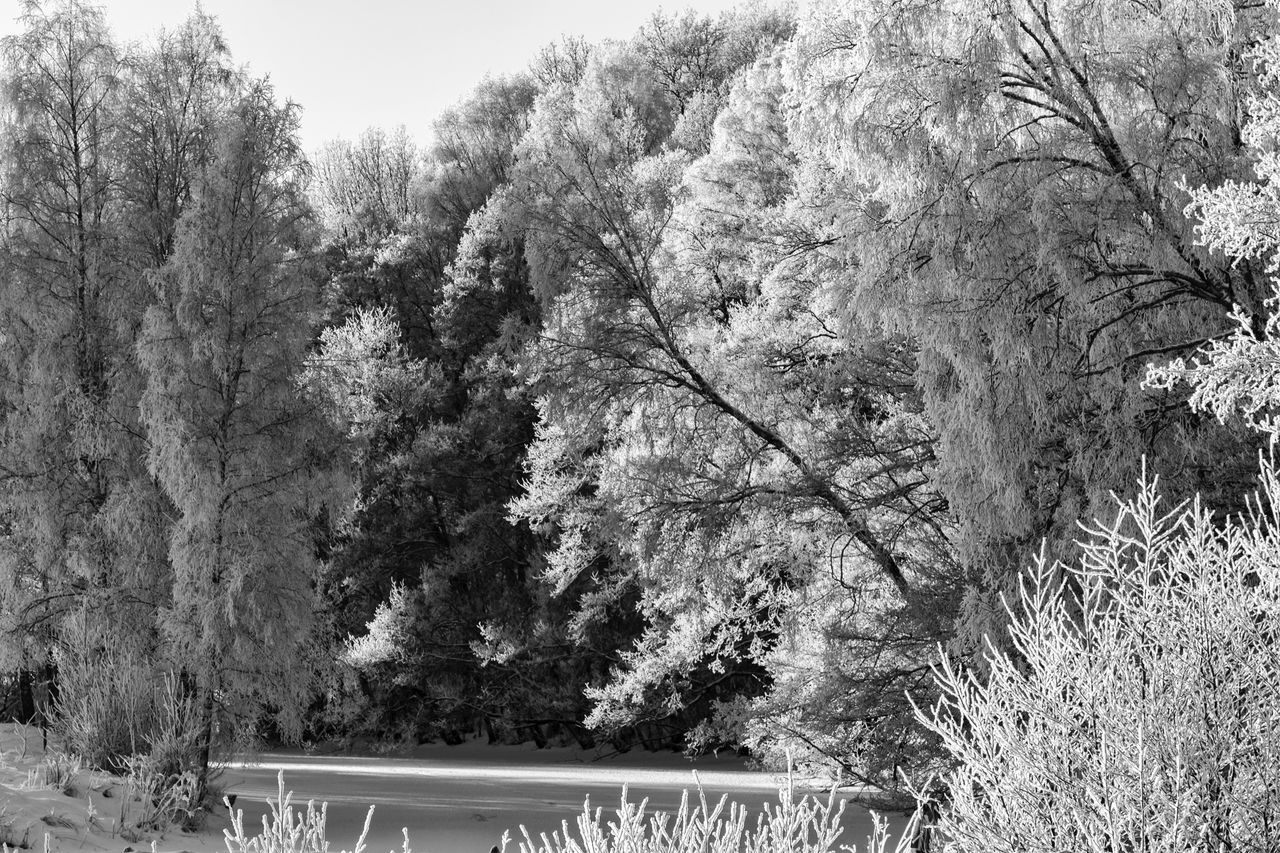 Winter landscape (bnw version) - Tree Nature Tranquility Branch Beauty In Nature Cold Temperature Snow Monochrome Photography Monochrome Black & White Black And White EyeEm Best Shots - Black + White Exceptional Photographs EyeEm Masterclass First Eyeem Photo Hello World The Week Of Eyeem Idyllic Landscape Scenics Tranquil Scene Eye4photography  Blackandwhite Beauty In Nature Outdoors