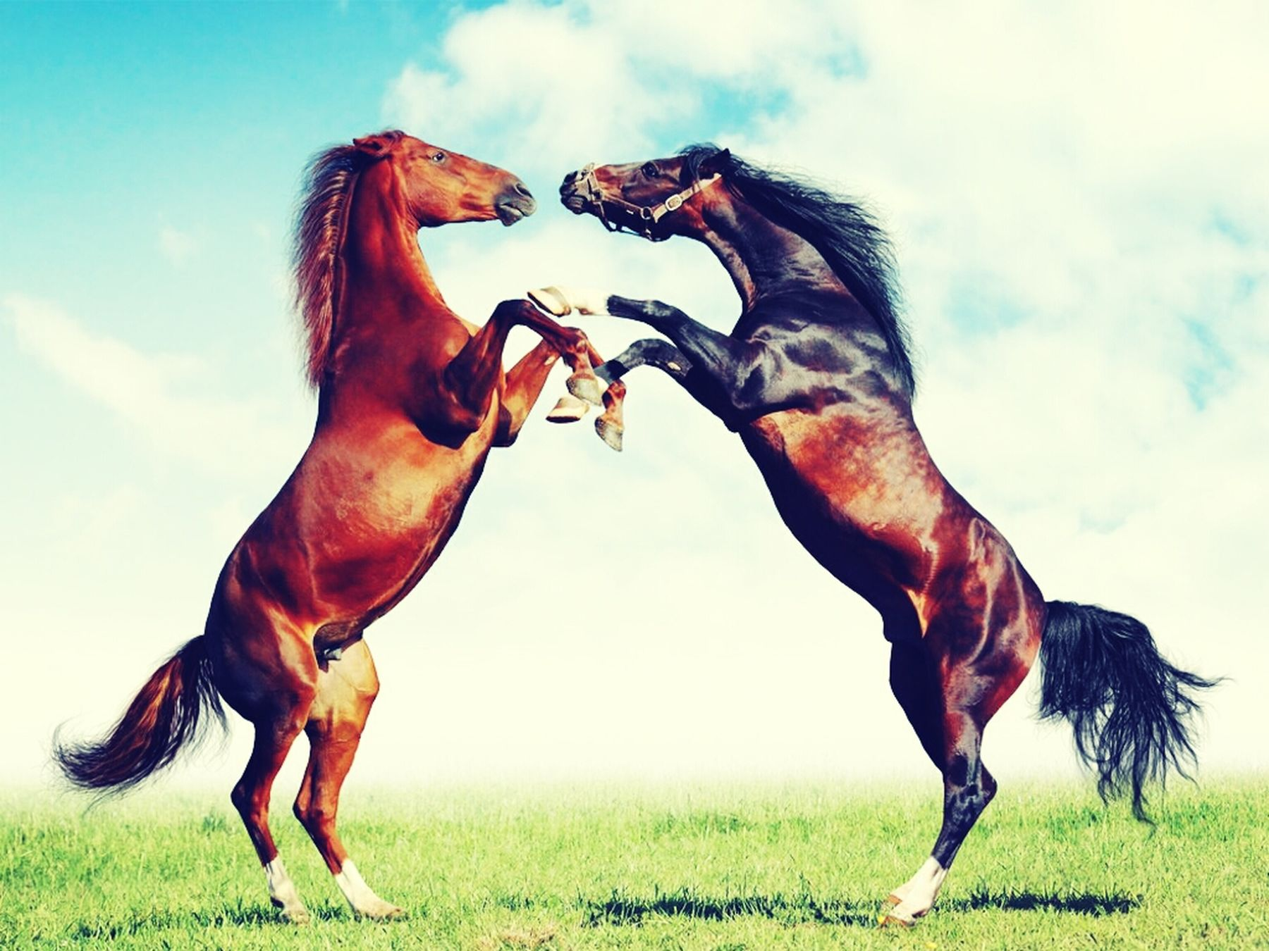 My love for horses <3 Oh God! ^.^
