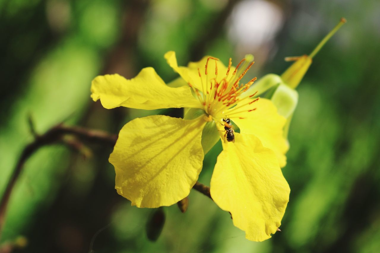 flower, insect, one animal, yellow, petal, nature, fragility, animal themes, animals in the wild, beauty in nature, plant, growth, outdoors, no people, freshness, day, close-up, focus on foreground, flower head, animal wildlife, pollination, bee