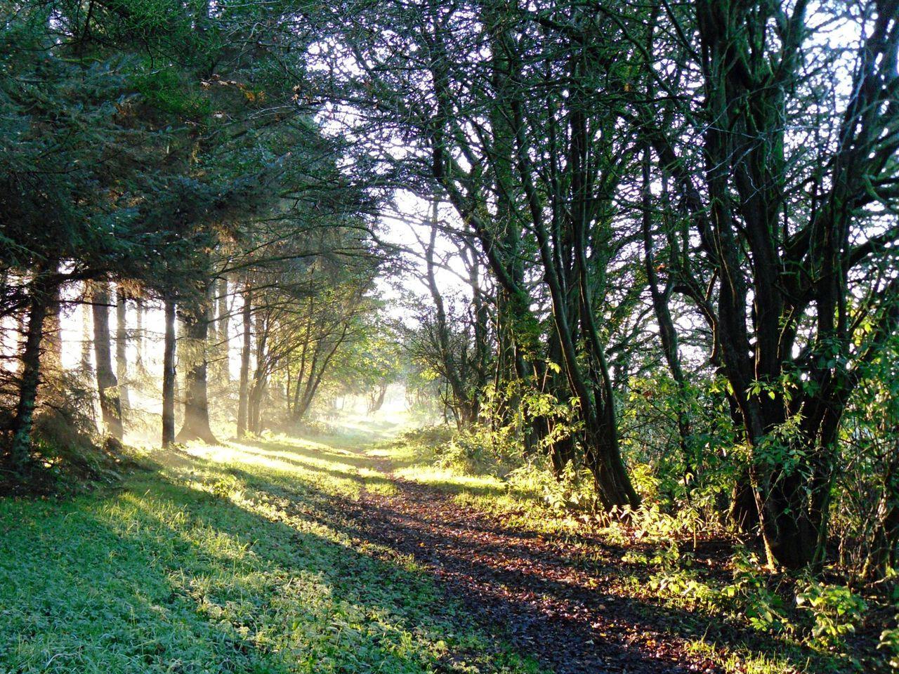 WoodLand Woodlandwalks Trees Forest Evening Sun North Yorkshire Suttonbank Travel Walking