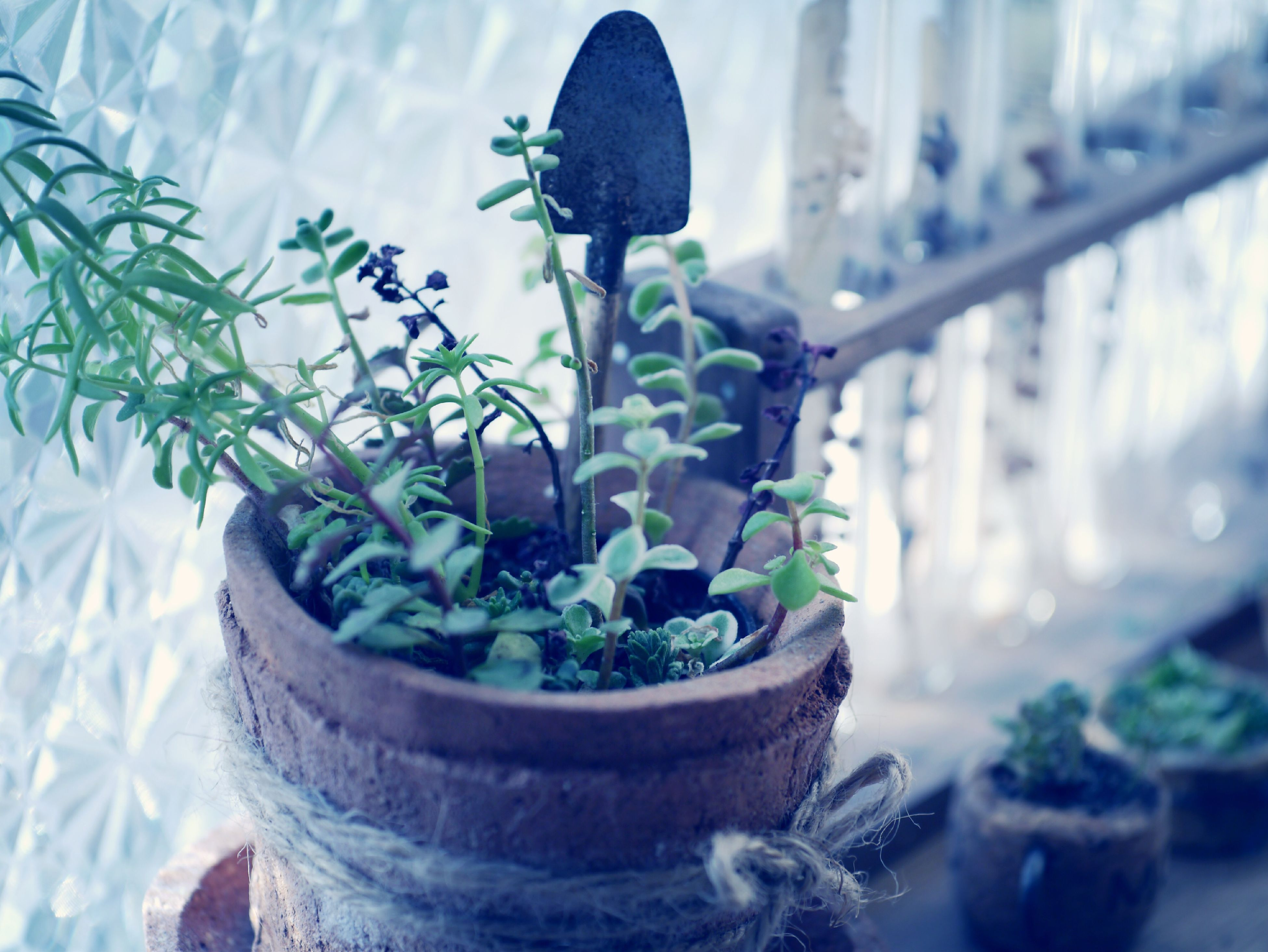 plant, potted plant, growth, leaf, focus on foreground, flower, close-up, nature, stem, green color, fragility, freshness, day, beauty in nature, wall - building feature, cactus, no people, outdoors, growing