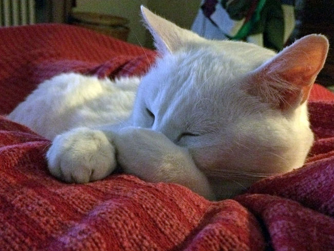 Animal Love Animal Photography Animal Posing Animal Themes Cat Close-up Domestic Animals Domestic Cat Eyem Collection Feline Pets Sleeping Whisker