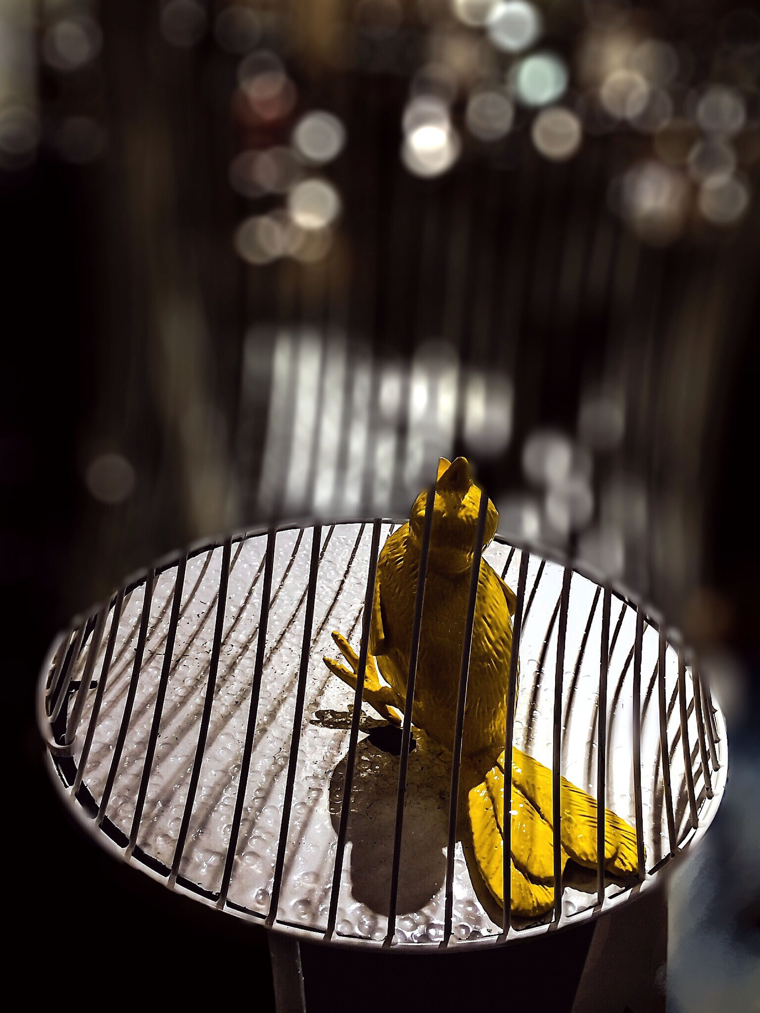 one animal, animal themes, yellow, focus on foreground, insect, animals in the wild, close-up, wildlife, indoors, no people, selective focus, sunlight, day, nature, butterfly - insect, high angle view, table, leaf, full length