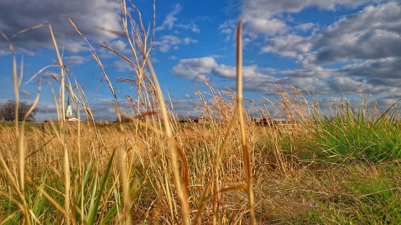 Amber waves of grain Growth Nature Agriculture Crop  Rural Scene Field Cloud - Sky Beauty In Nature Close-up Scenics Tranquil Scene Amber Waves Of Grain EyeEmNewHere
