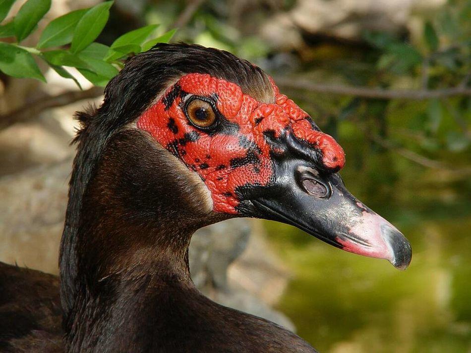 Beautiful stock photos of duck, Animal Body Part, Animal Neck, Animal Themes, Animals In The Wild