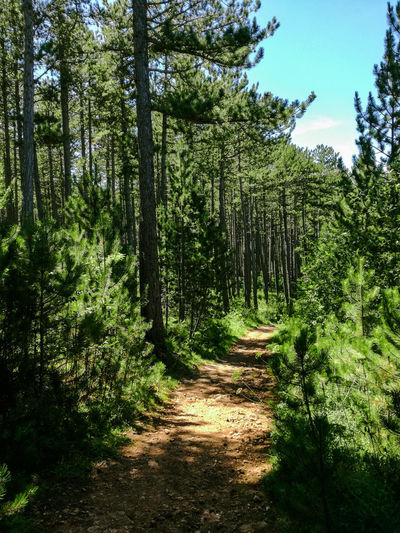 Beauty In Nature Black Pine Footpath Forest Landscape_photography Light And Shadow Outdoors Plant Scenics The Way Forward Tranquil Scene Woods