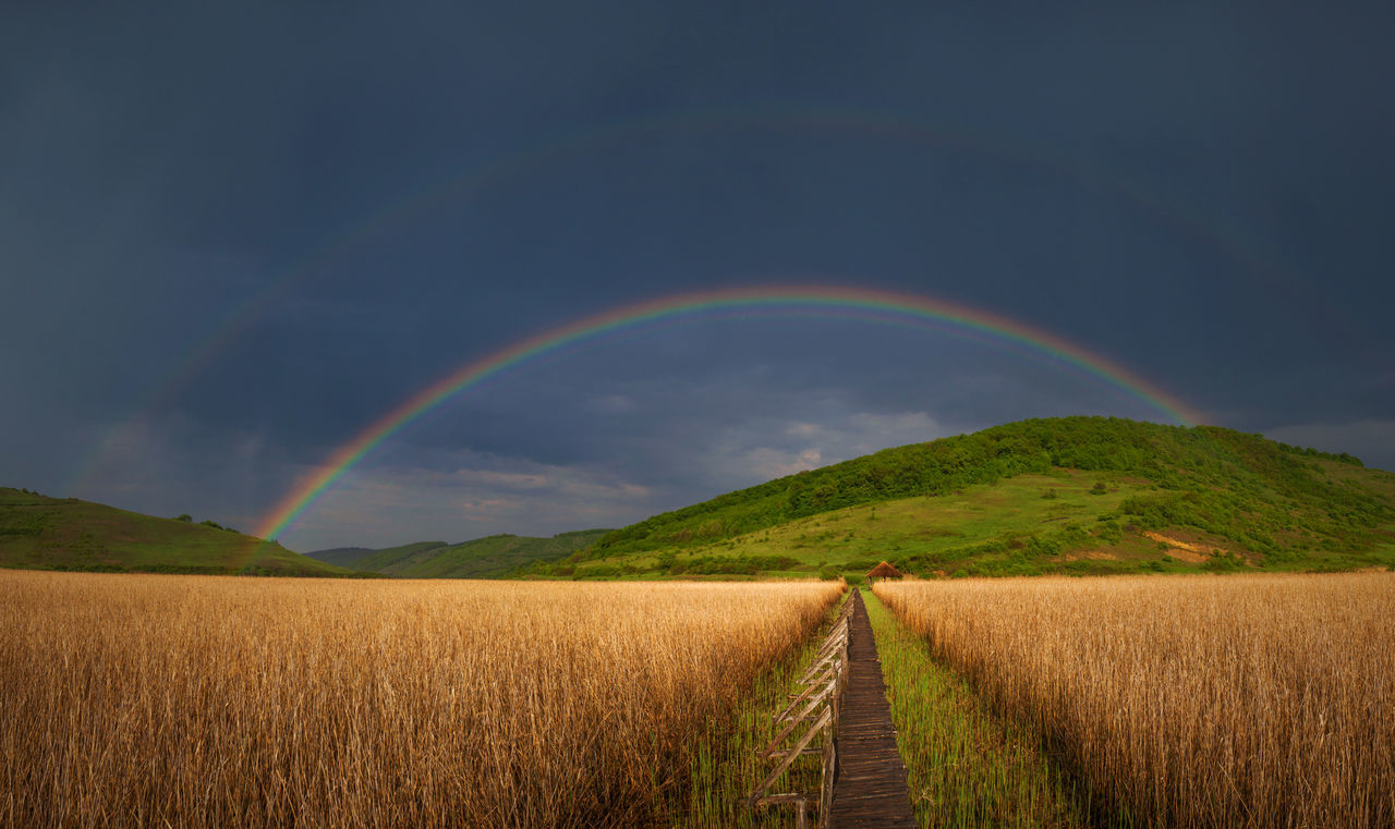 Double rainbow in a reed natural reservation near Cluj, Romania. Cloudy Green Natural Nature Panorama Panoramic View Path Rain Storm Swamp Beauty Blue Bridge Clouds Double Rainbow Field Hill Idyllic Landscape Rainbow Reed Way Wooden