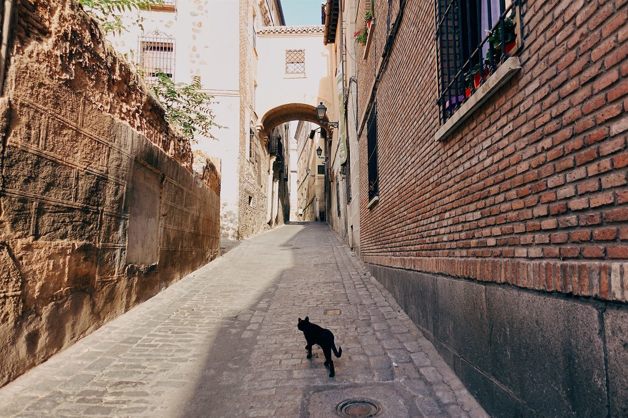 Animal Themes Architecture Black BLackCat Built Structure Cat City City Life Cityscape Historic Historical Building Old Buildings Old Town One Animal Outdoors Pets SPAIN Street Streetphotography Sunset The Way Forward Travel Travel Destinations Walking Walking Around Live For The Story The Street Photographer - 2017 EyeEm Awards The Architect - 2017 EyeEm Awards The Great Outdoors - 2017 EyeEm Awards Place Of Heart