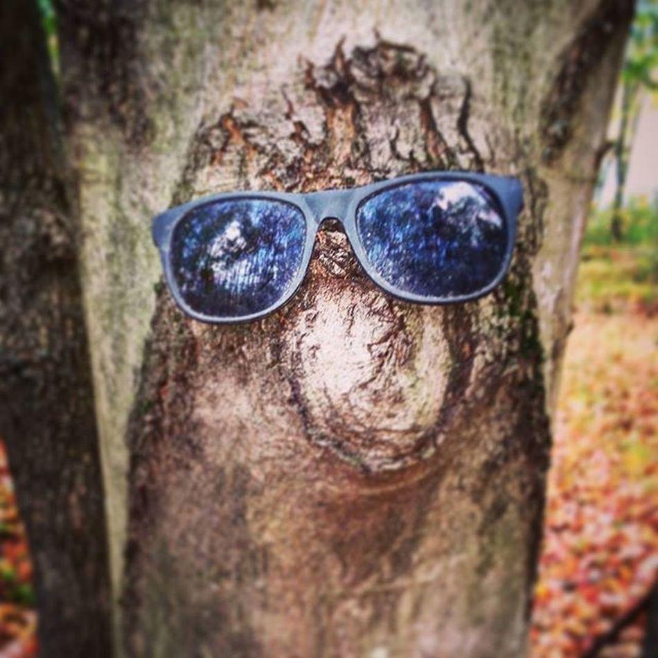 Found on a tree, while out walking! Supercute Creative Treeface Sunglasses Onemanstrash Upcycle Reuse Walking Trees Tree Woods Lakegalena Peacevalleypark Pennsylvania Someonesfunny Funnyface Funny
