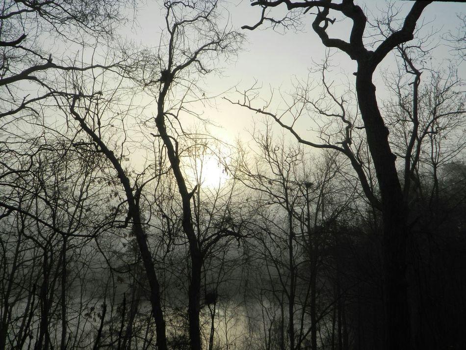 foggy sunrise Hugging A Tree Streamzoofamily Monochrome Natures B&w Tadaa Community Taking Photos Winter EyeEm Best Shots EyeEm Nature Lover Nature