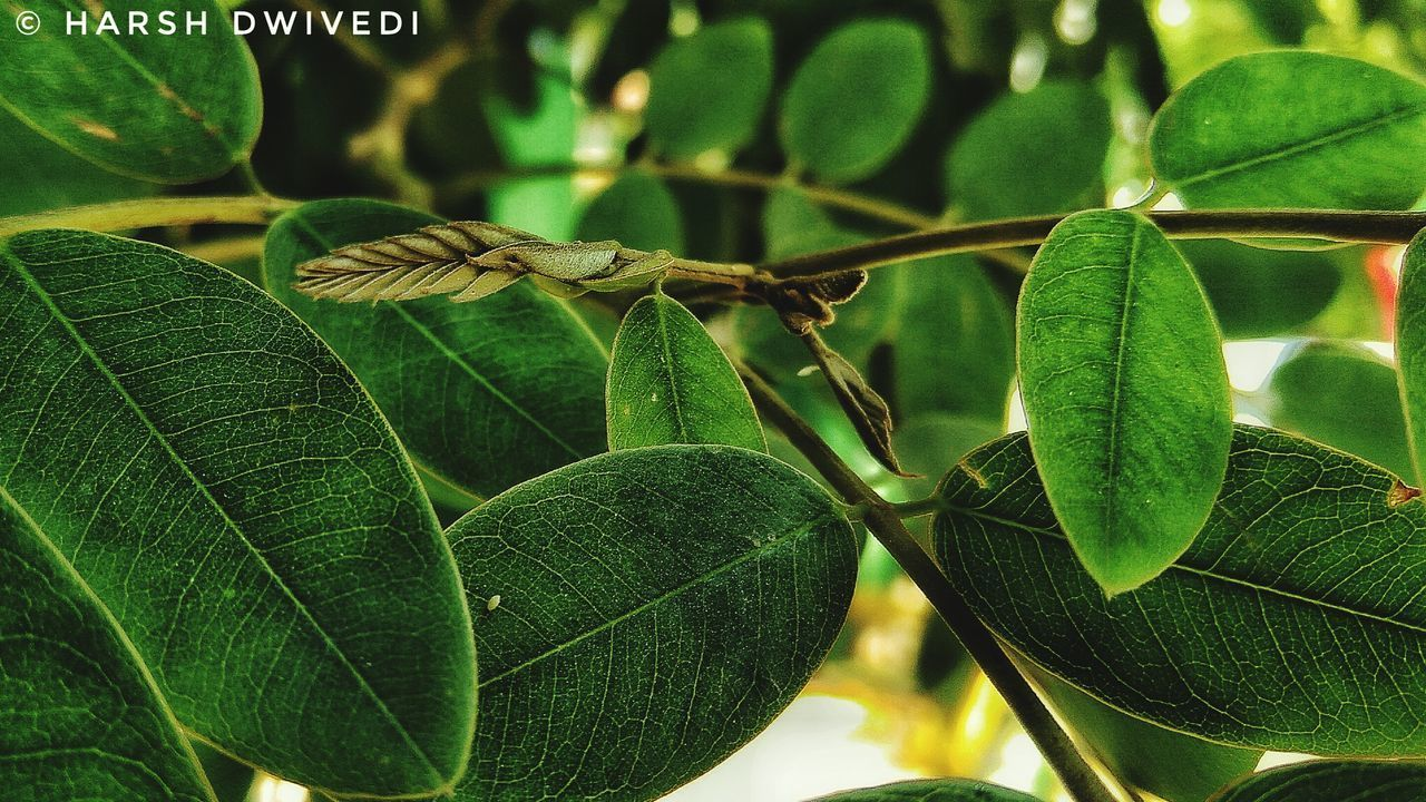 leaf, green color, growth, nature, plant, no people, close-up, day, focus on foreground, beauty in nature, outdoors, freshness, fragility