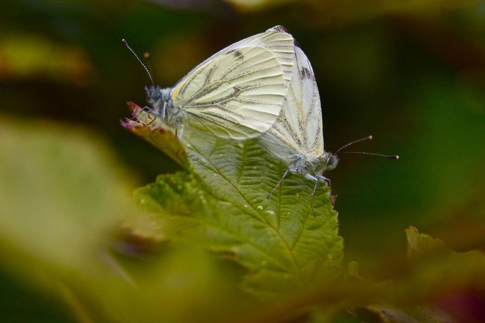 Beautiful stock photos of butterfly, Animal Themes, Animals In The Wild, Butterfly, Close-Up