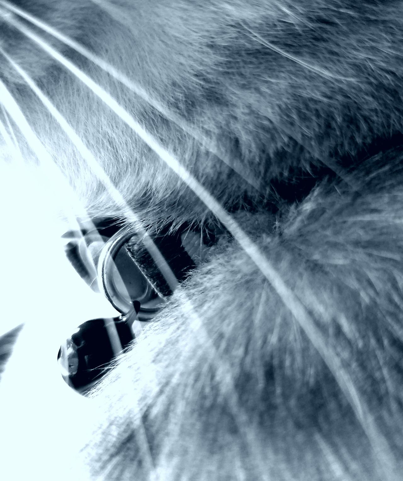 WHISKERS Whiskers The Song Of Light MUR B&W Cats Portrait Extreme Close Up Animal Hair Feline Domestic Animals Pets Domestic Cat Beauty In Nature Fluffy Love Furry Love