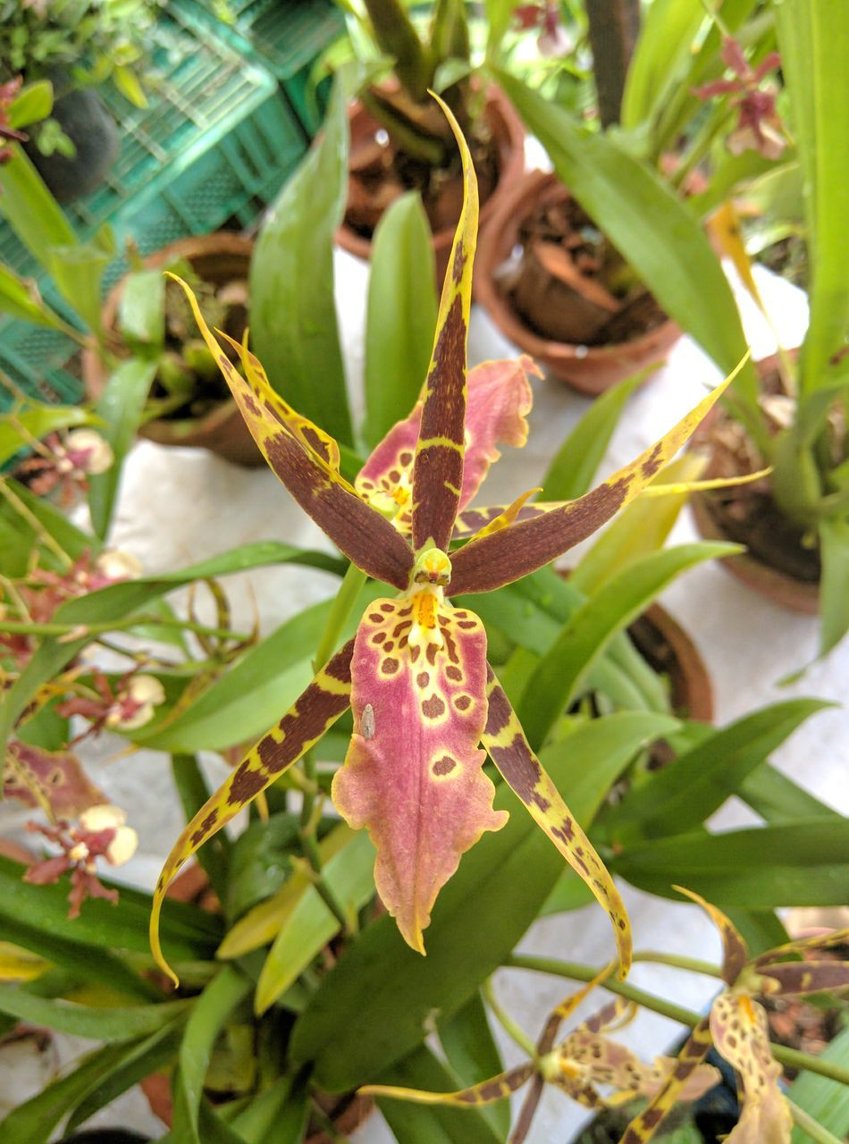 Nature Photography Flowers Orchids Exotic Oo