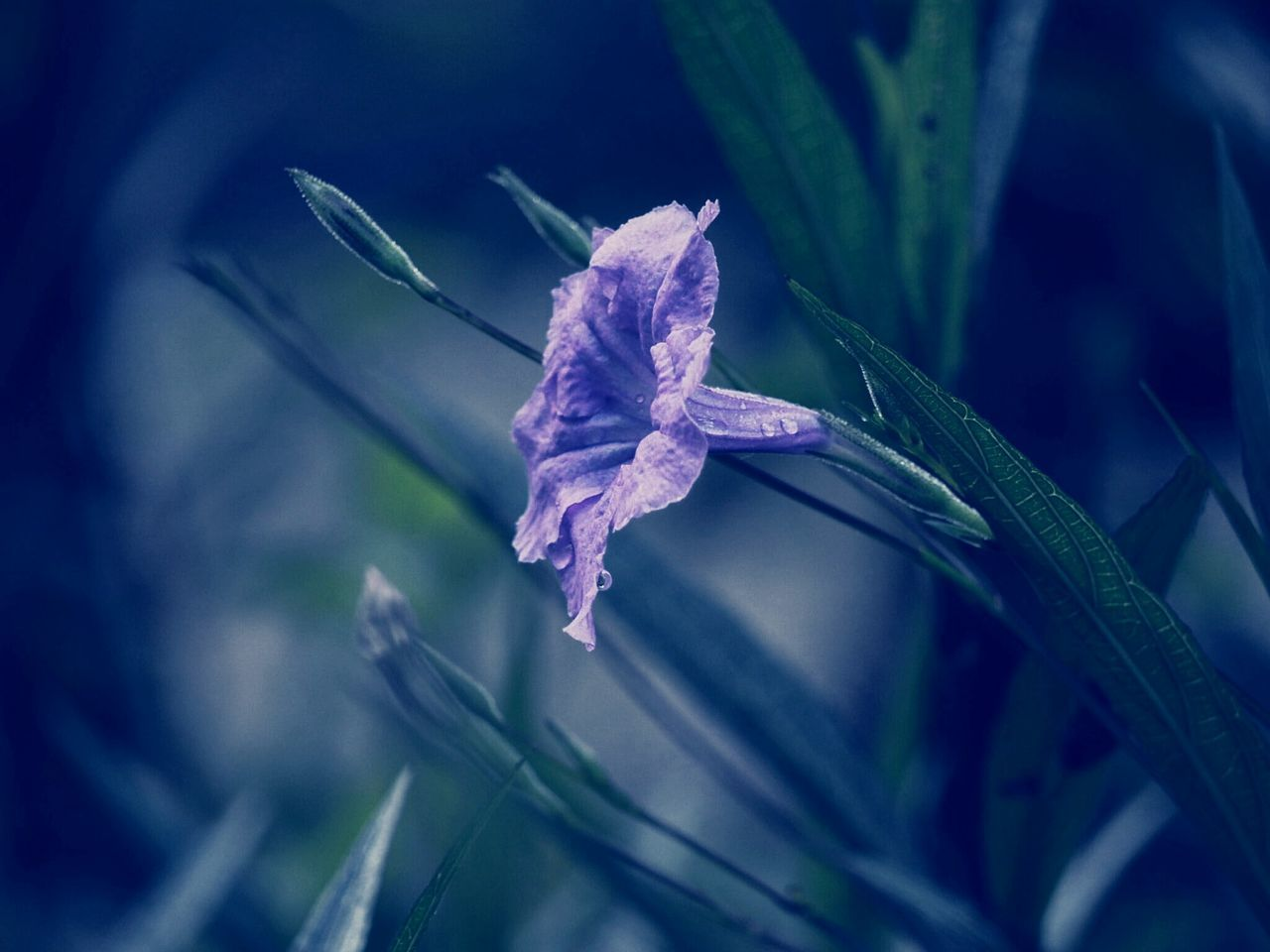 plant, nature, beauty in nature, fragility, growth, flower, no people, leaf, close-up, outdoors, day, water, flower head, freshness