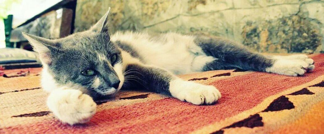 Kedicik Cat♡ Animals Animal_collection Fıstık Kedi EyeEm Nature Lover Lifestyle Sektör Yapım EyeEm Best Shots
