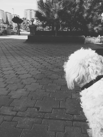 Dog Enjoying Life Streetphotography Relaxing