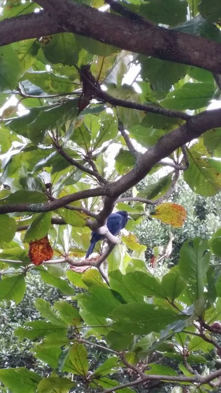 Jackdaw Bird Jackdaw Blue Beautiful Nature Very Beautiful Photo Working Comtemplation LoveNature