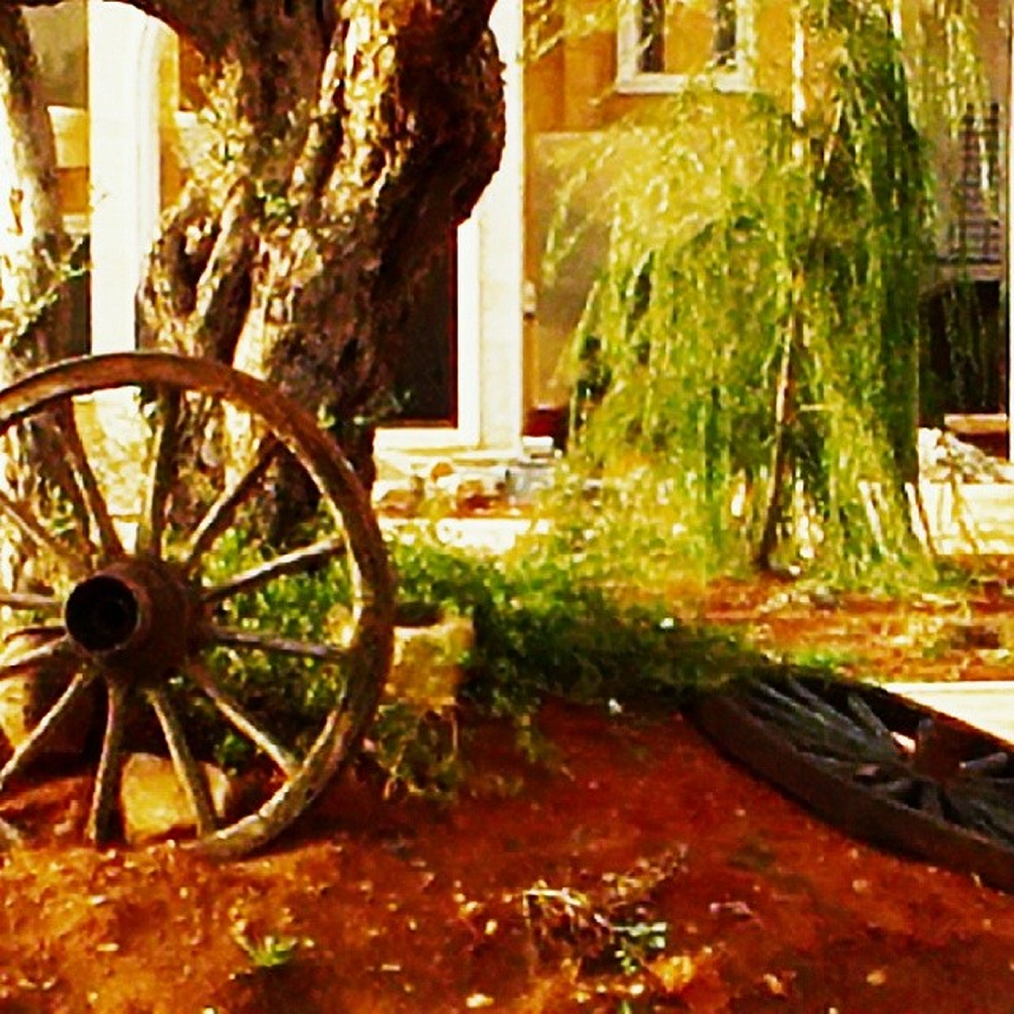 built structure, house, bicycle, land vehicle, architecture, plant, front or back yard, potted plant, abandoned, building exterior, growth, mode of transport, wheel, stationary, old, transportation, sunlight, tree, day, parked