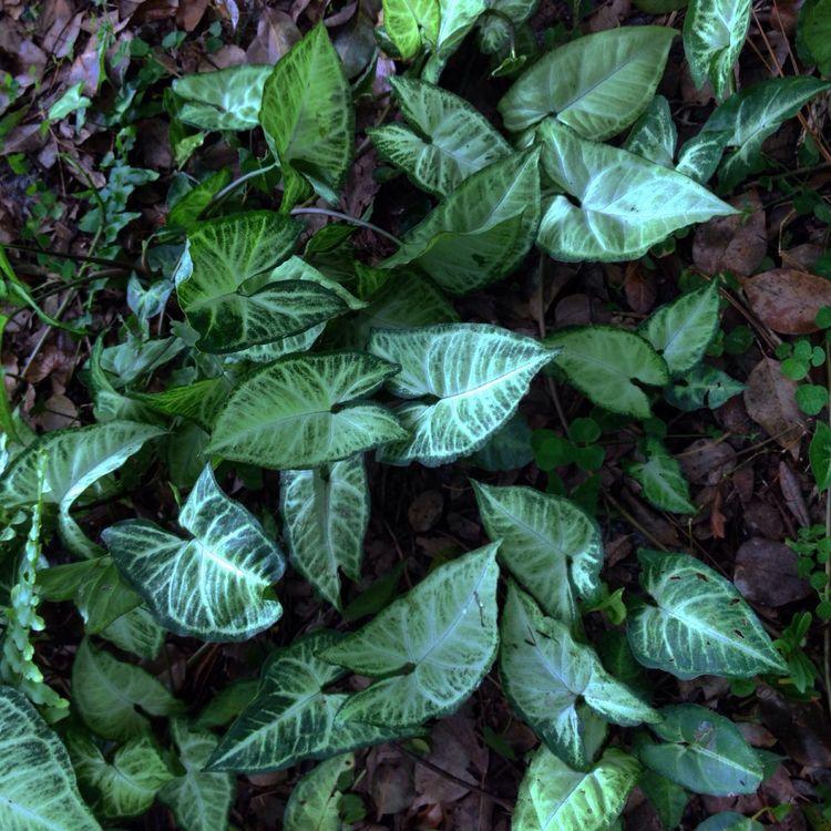 Leaf Plant Green Color Nature