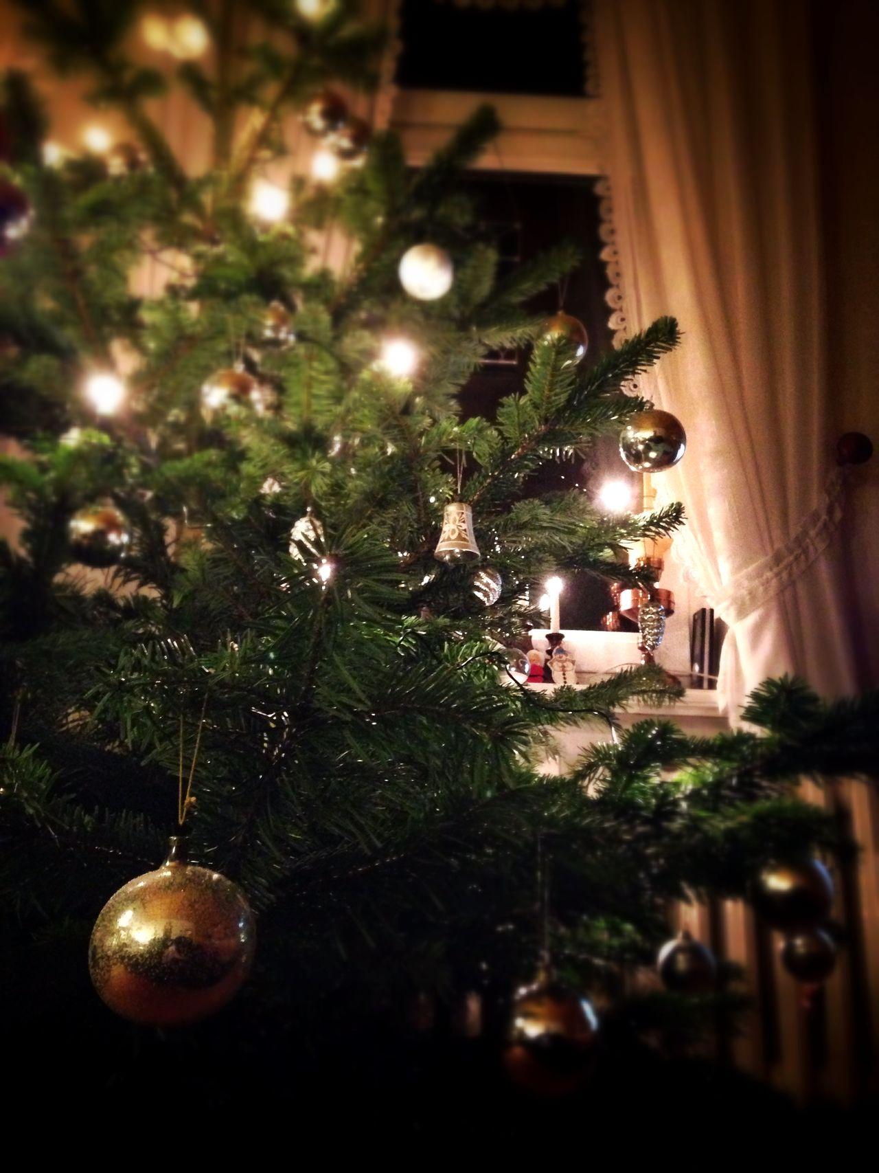 Beautiful stock photos of christmas tree, Blankenburg, Christmas, Christmas Lights, Christmas Ornament Window
