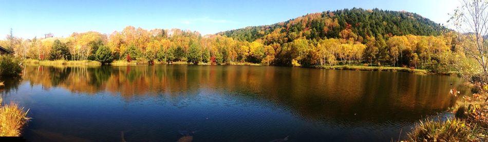 信州 志賀高原木戸池の Panorama 写真になります✨ 北信濃の🍁本番になります😃 Beautiful Day Lake Nature Photography EyeEm Best Shots Amazing View Colors Of Autumn EyeEm Best Edits EyeEm Nature Lover Fall Beauty 山ノ内町