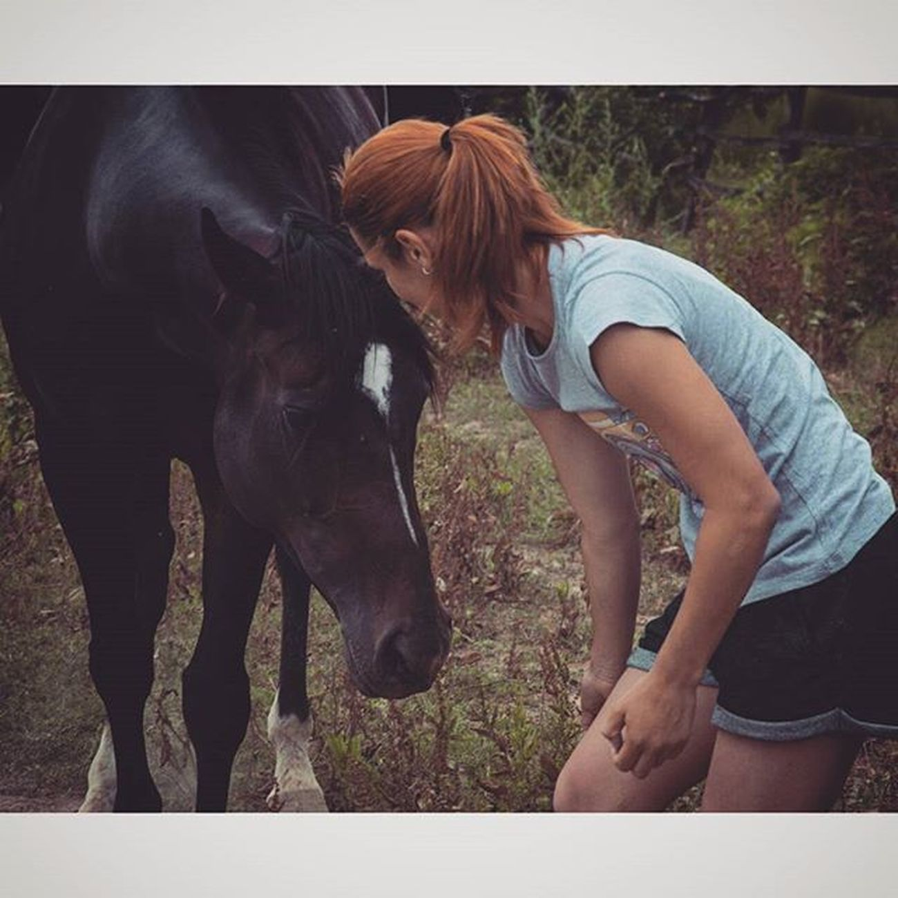 Kamena ☺ Thoroughbredsofinstagram Thoroughbreds Horsesofinstagram Purasangreinglés equestrianlife