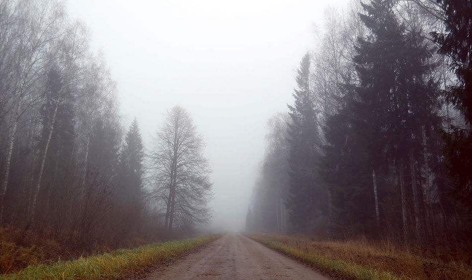 Beauty In Nature Day Diminishing Perspective Fog Foggy Forest Grass Hazy  Landscape Mist Nature No People Outdoors Road Scenics Sky The Way Forward Tranquil Scene Tranquility Transportation Tree