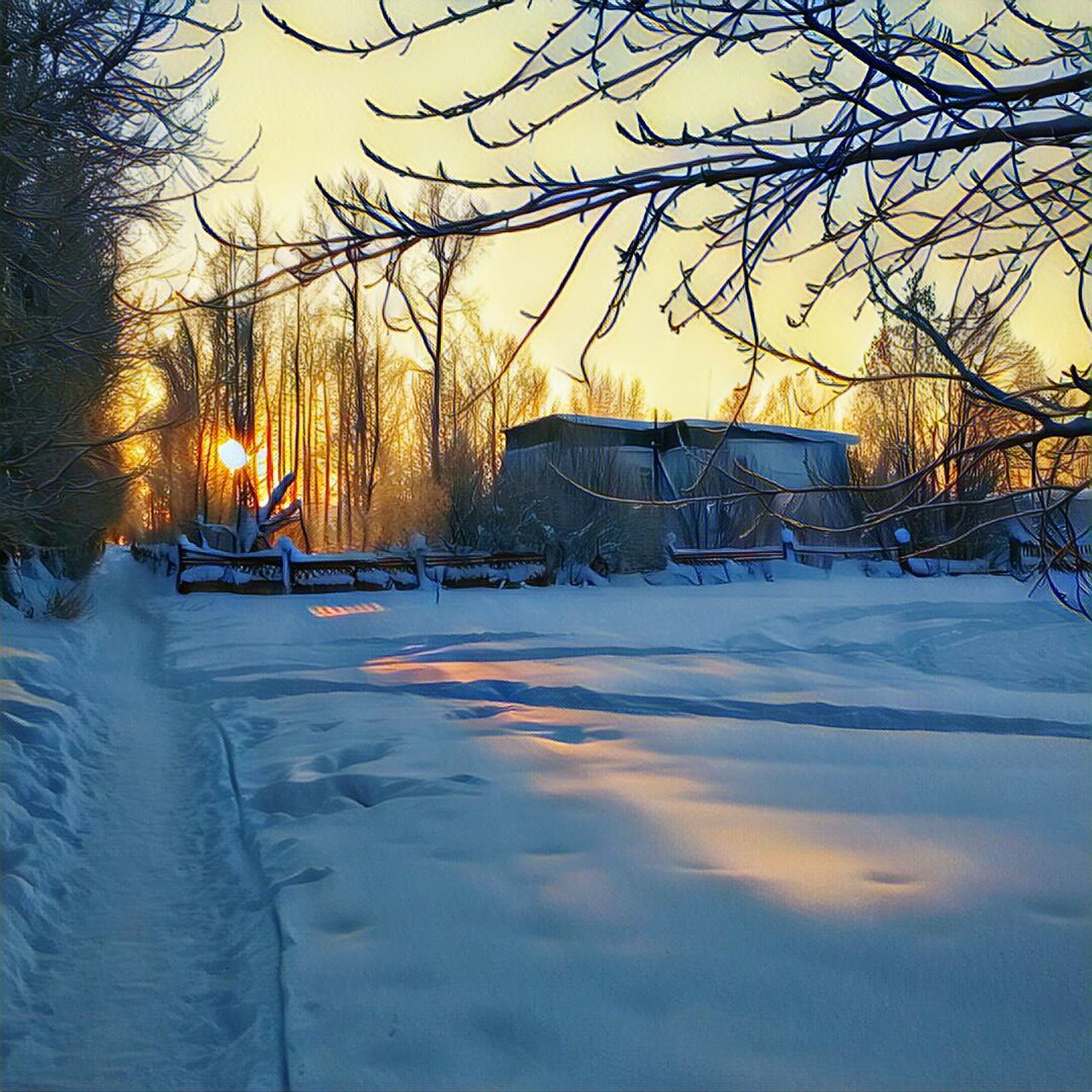 winter, snow, cold temperature, tree, bare tree, weather, cold, nature, sunset, frozen, car, land vehicle, outdoors, transportation, branch, beauty in nature, tranquility, no people, illuminated, scenics, road, sky, snowdrift, day