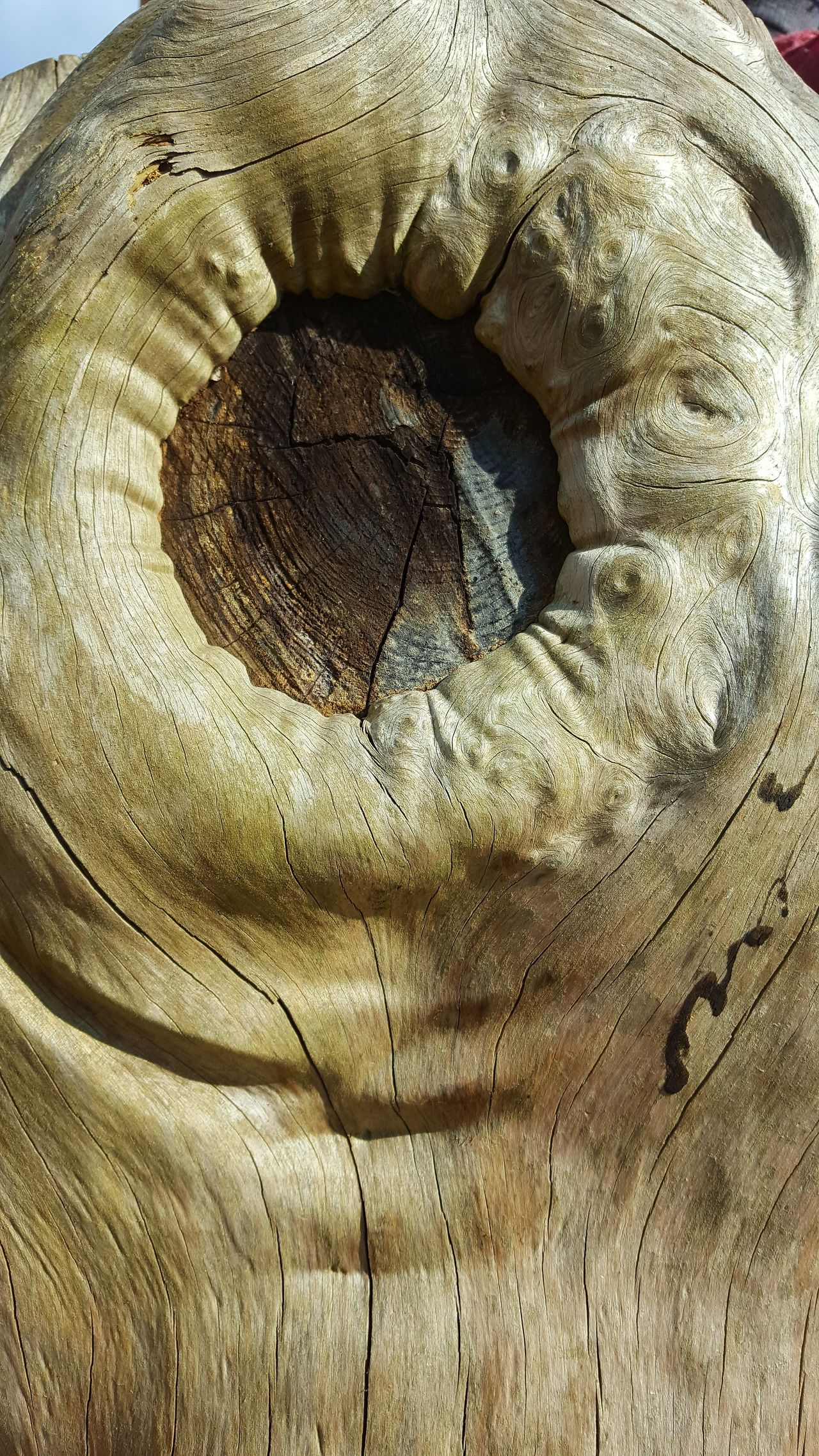 Wooden porthole. Textured  Backgrounds Abstract No People Nature Surreal Tree Bark Texture Tree Trunk Smooth Bark Park Life Sunlight Outdoor Photography EyeEm Gallery Ayeshea Bah Fresh On Eyeem  No Filter Textured  Bark Form Close-up Full Frame Tree Hole Shapes In Nature