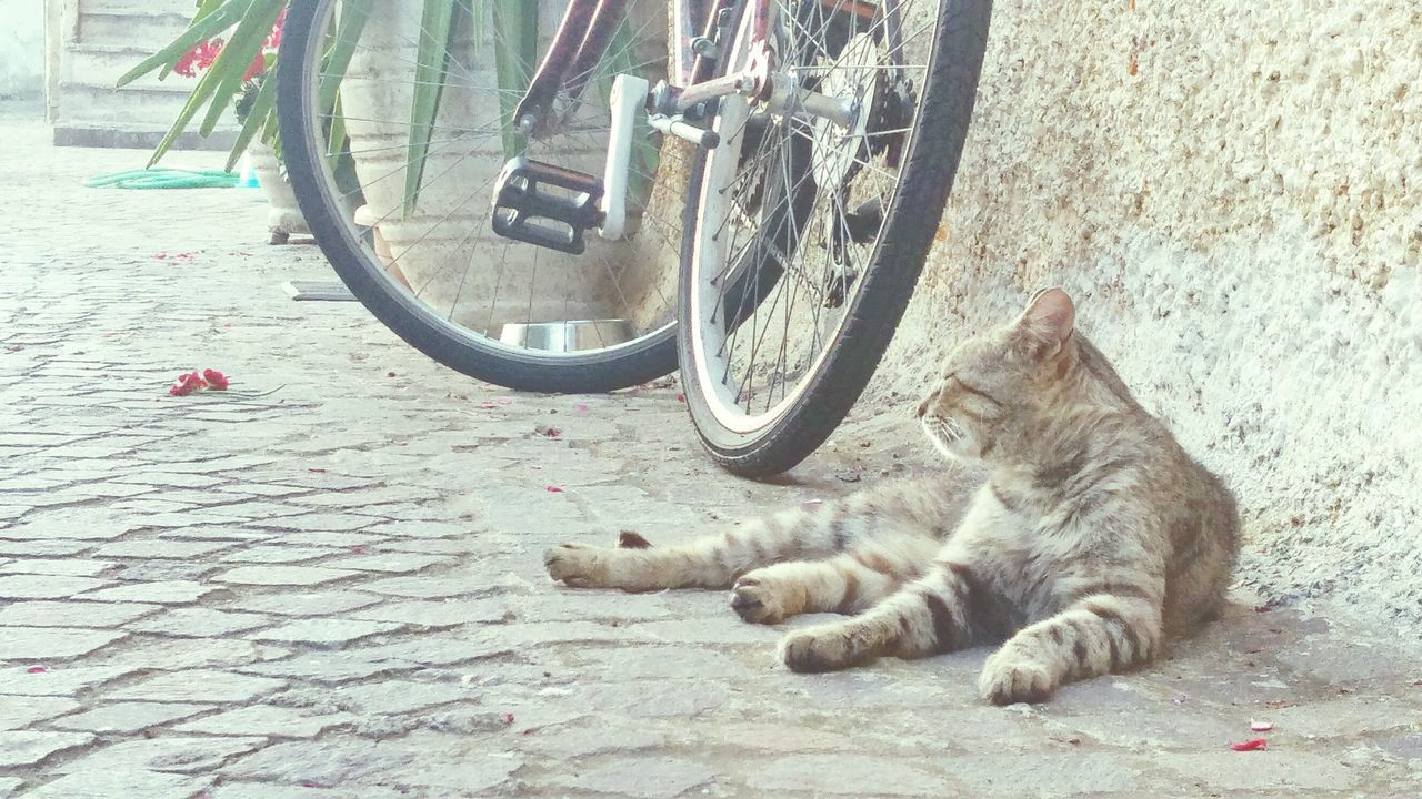 Lazy Lazyday Routine Routine Life DreamLife Rest Nap Time Lazy Cats Easy Photo Proudeye Cats Grey Bikes Town Relax Streetscapes