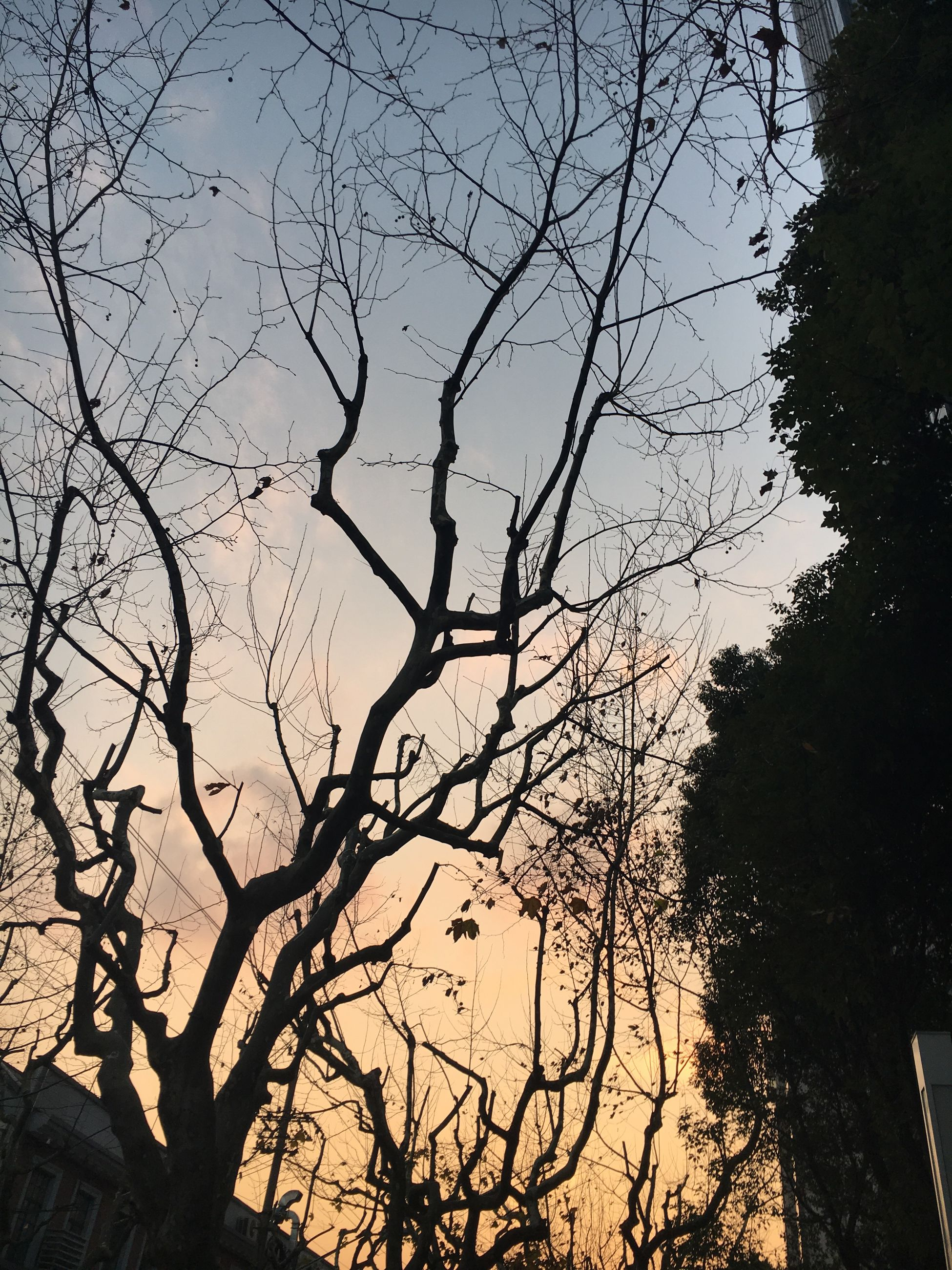 sunset, nature, silhouette, sky, beauty in nature, tree, sunlight, tranquility, no people, low angle view, outdoors, scenics, growth, tranquil scene, day