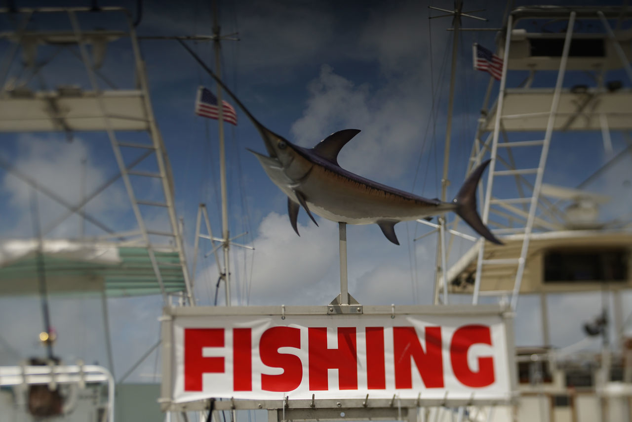 Boating Animal Themes Animals In The Wild Charter Fishing Fishing No People Ocean One Animal Outdoors Sailfish Saltlfe Sky Water