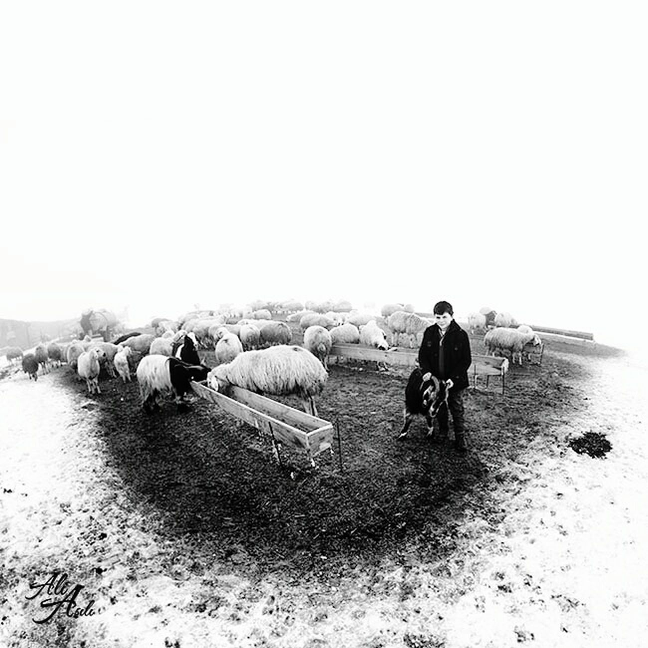Rüya gibi bir yerde gerçek hayatlar. ??? Real lives in dreamland ... EyeEm Best Shots - Black + White EyeEm Best Shots - People + Portrait EyeEm Blackandwhite Taking Photos Animals Rural Deepfreeze