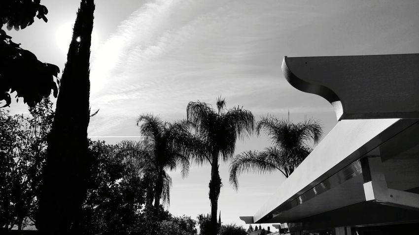 Back Yard Palms And Clouds In Black And White Tree Sky Cloud - Sky Outdoors No People Building Exterior Oakstrails Photos Art Is Everywhere Vapor Trail Clouds Palms And Sky Tree Day Black And White Friday Black And White Photography Black & White B And W B&w B And W Pic Shadows And Sunlight Shadows And Light