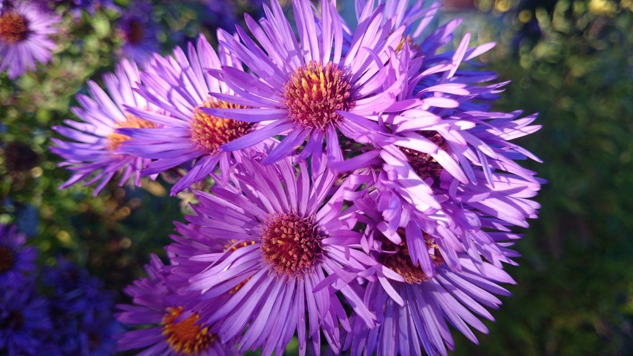 Flowers Vibrantpetals EyeEm Nature Lover Nofilter