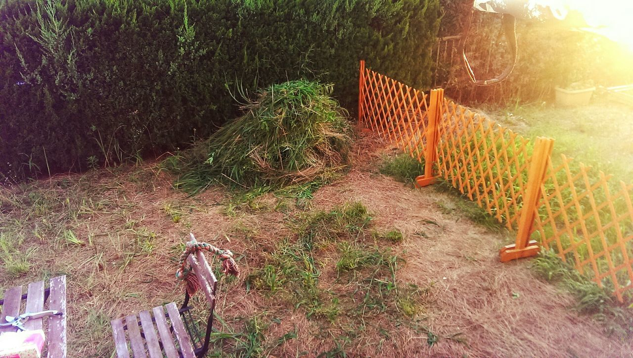 Half of the yard with the pile of grass i now need to shove into bags~ Check This Out JapanLife Taking Photos