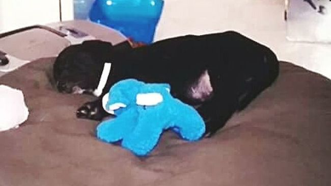 Sweet Sleeping Puppy A Dog Named Stone Dogs Of EyeEm I Miss My Best Friend  Furbabies Summer Dogs