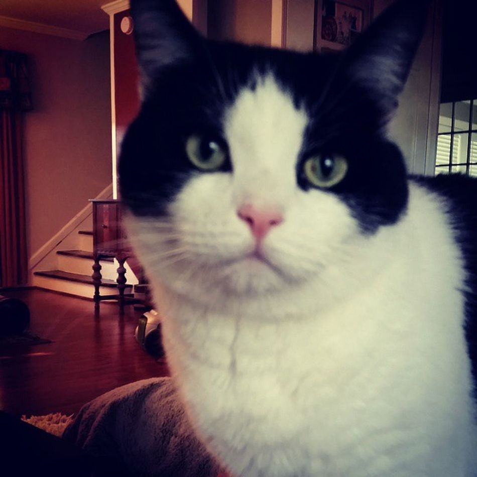 Richardthecat does not look impressed Whydoyoualwaystakemypicture Justgivemefood Catsofinstagram catpicoftheday catsarefunny