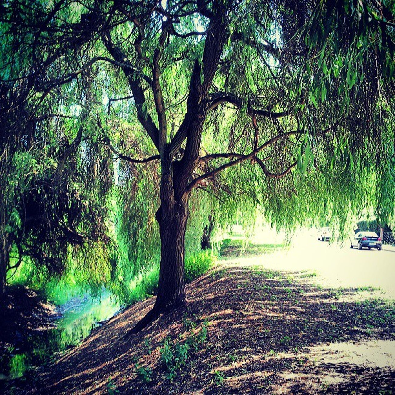 Gras  Green Tree Branches Leaves Nature Sand Street Water Fliess Berlin River Hang Car Summer Warm July Sunlight Happy Mood Instatags