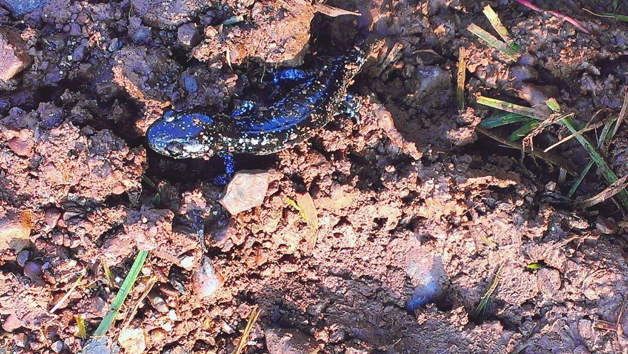 Taking Photos Salamander